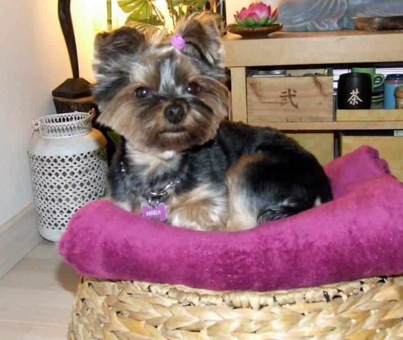 Peluquería canina en La Latina
