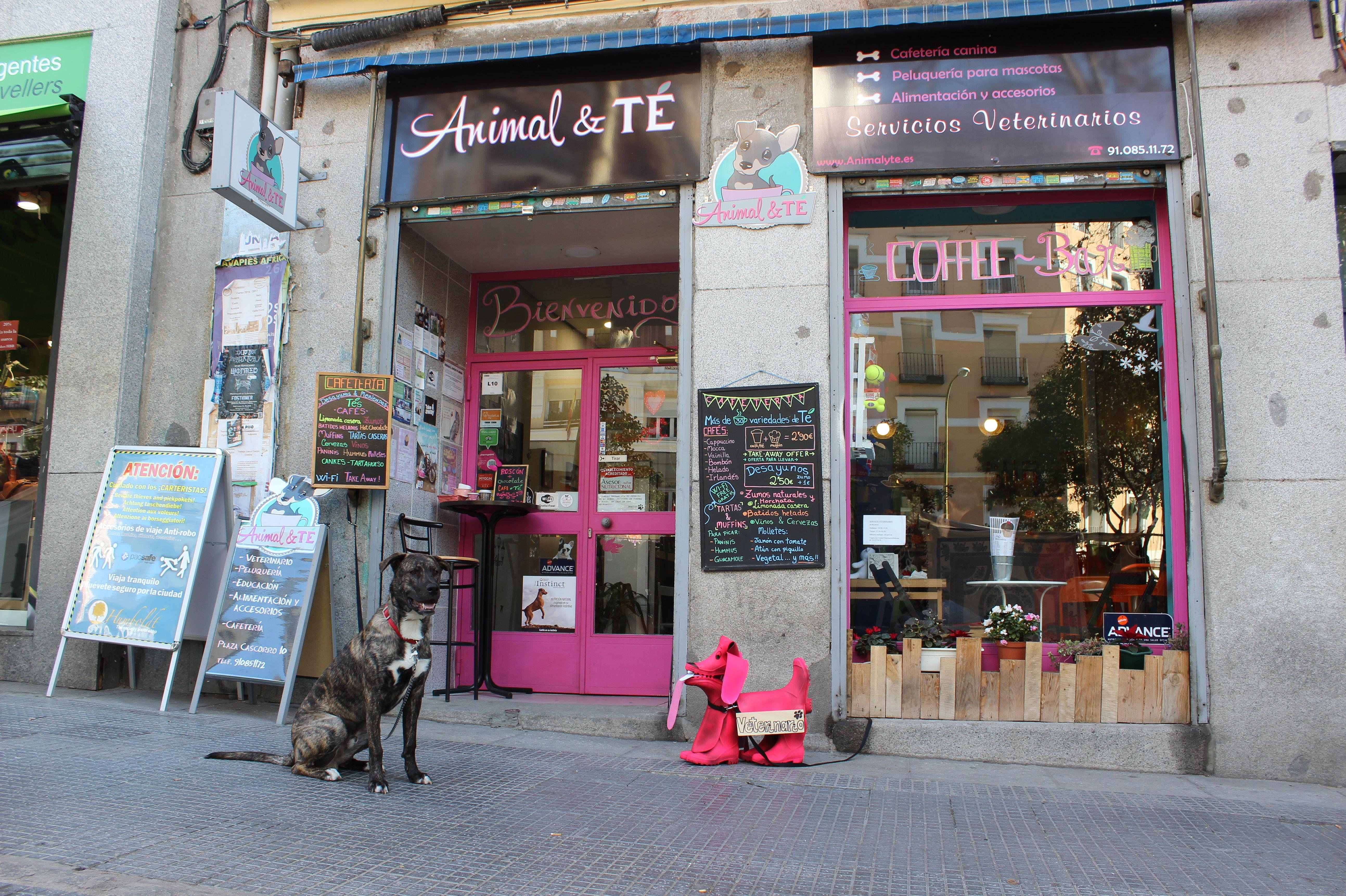 Foto 2 de Tienda de animales en Madrid | Animal&TÉ