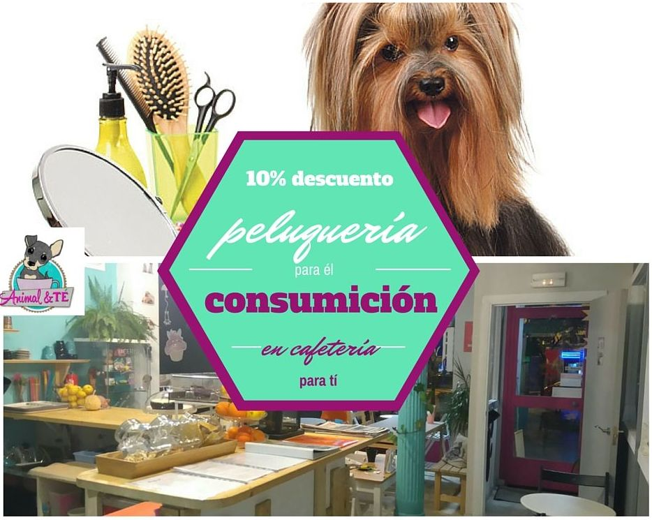 Peluquería canina La latina, Madrid. Animal&TÉ