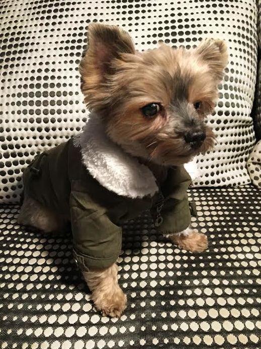 Charlie con su parka, moda otoño-invierno en Animal&TÉ