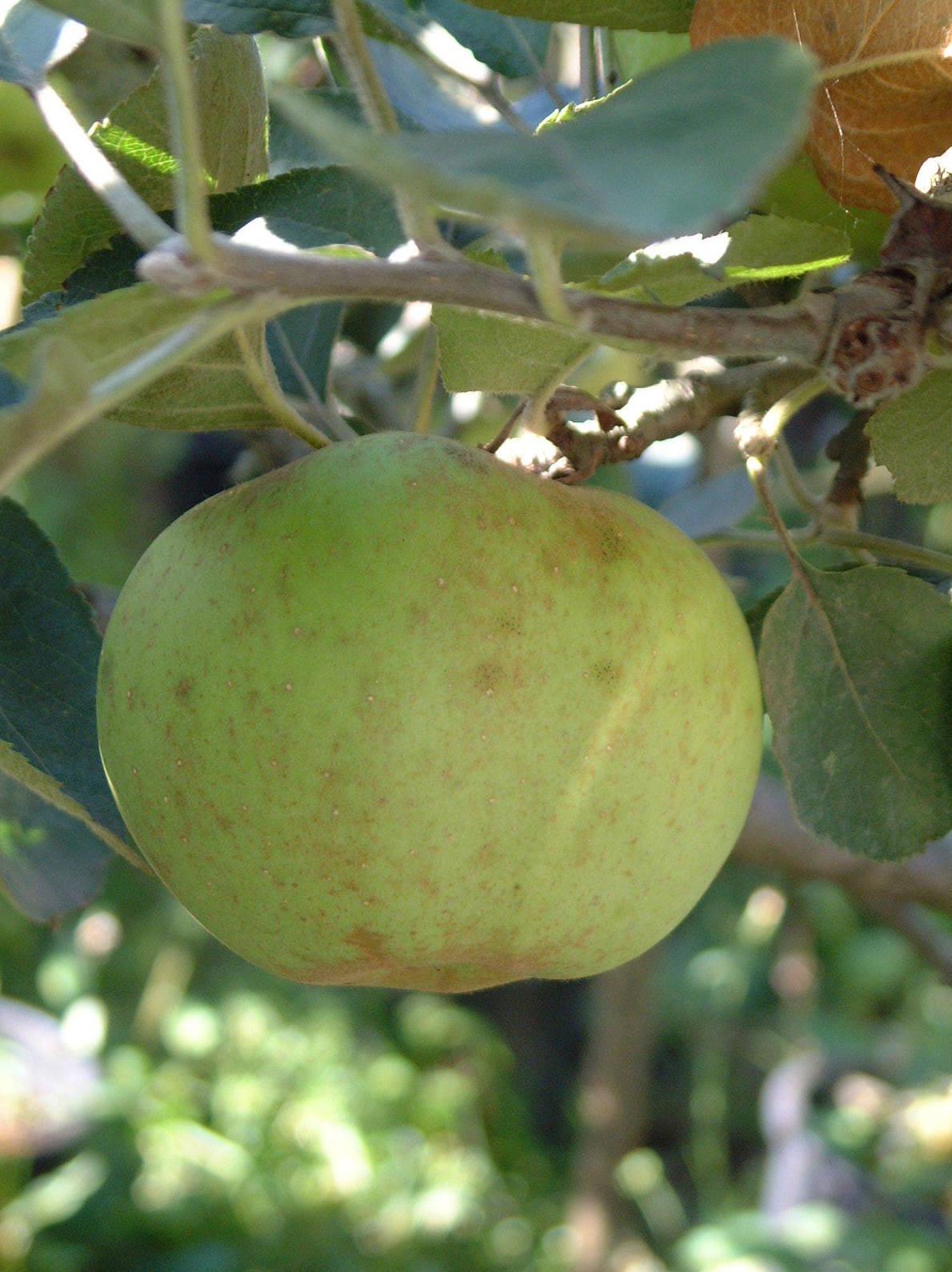Hortícola: Servicios de Jardinería Ártabro
