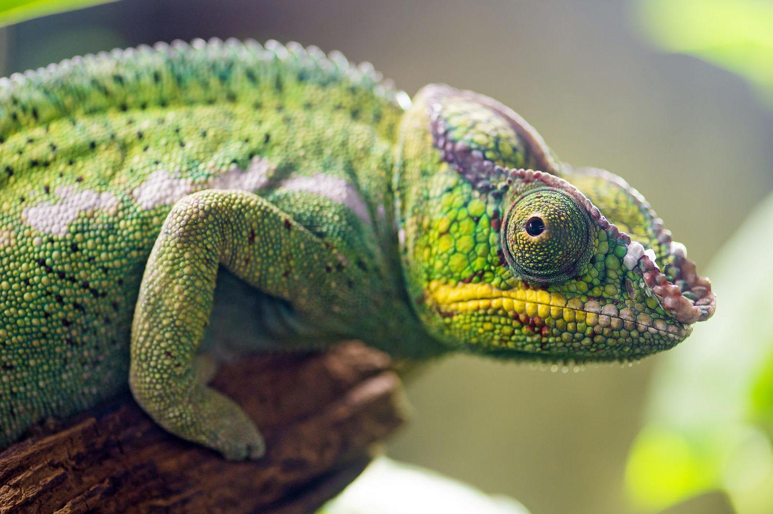 Animales exóticos : Catálogo de Clínica Veterinaria Leioa
