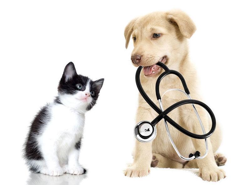 Consultas diarias : Catálogo de Clínica Veterinaria Leioa