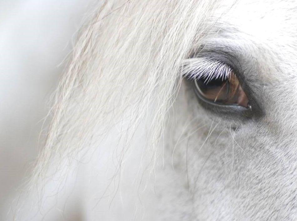 Terapias con caballos en Barcelona