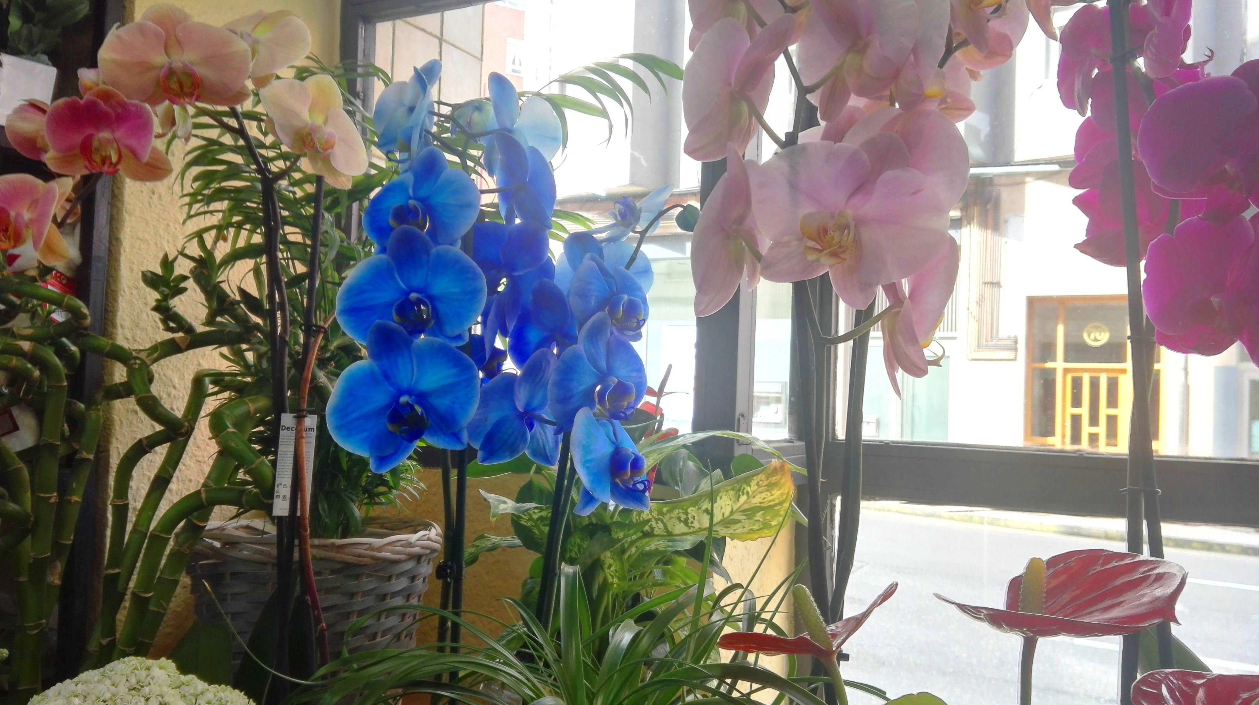 Orquídeas en varios colores