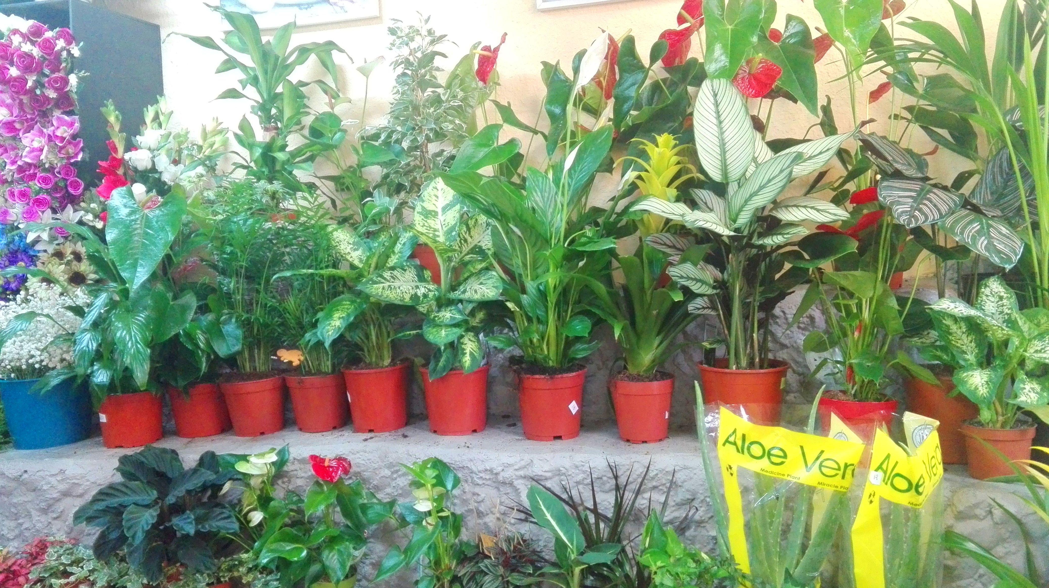 Variedad de plantas de interior