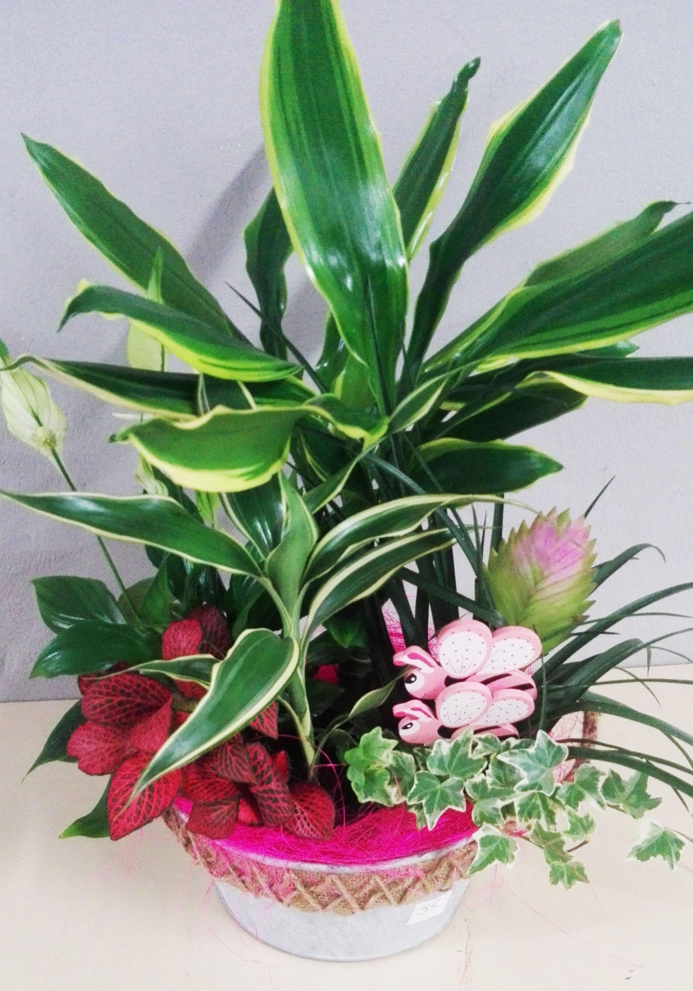 Conjunto decorativo de plantas