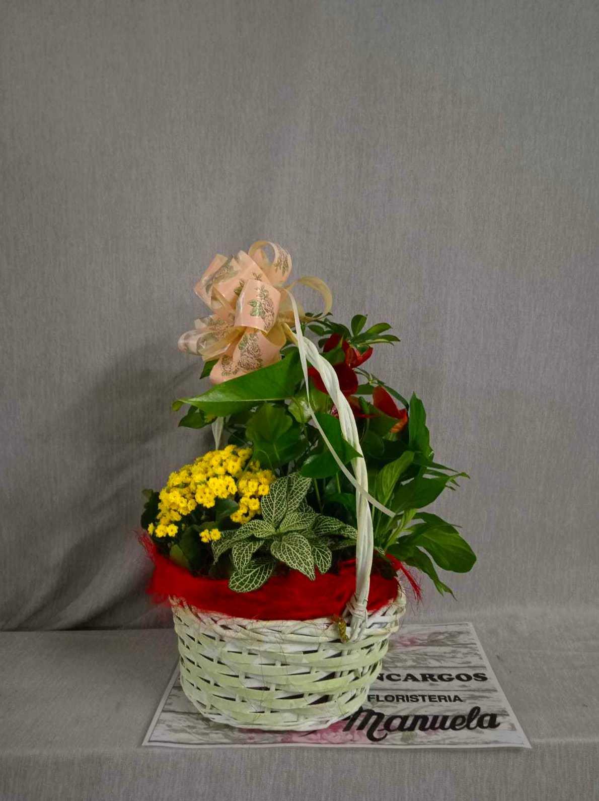 Cesta de regalo de plantas