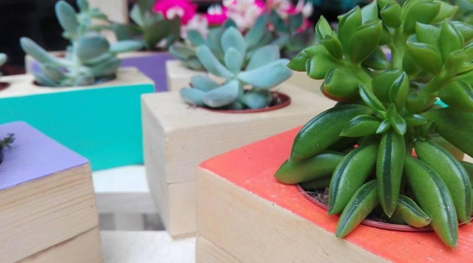 Plantas grasas en macetero artesanal de madera