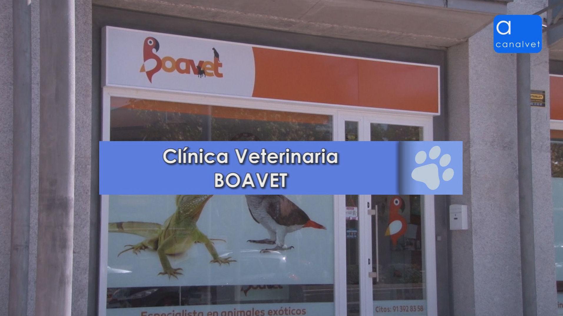 Foto 6 de Veterinarios en Boadilla del Monte | Clínica Veterinaria Boavet