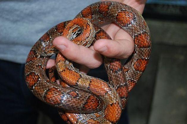 Veterinario de serpientes Madrid