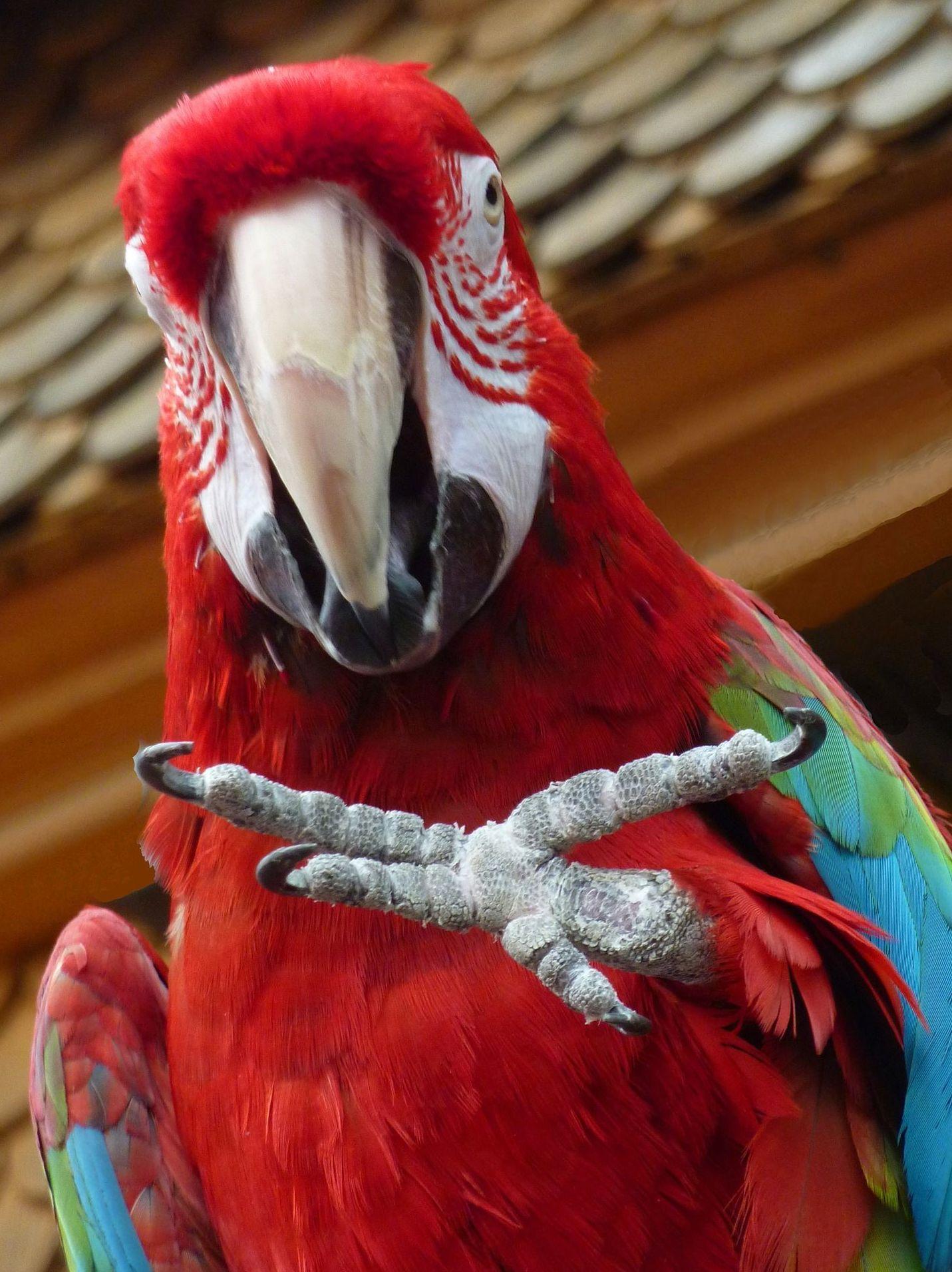 Veterinarios para aves y animales exóticos en Boadilla del Monte