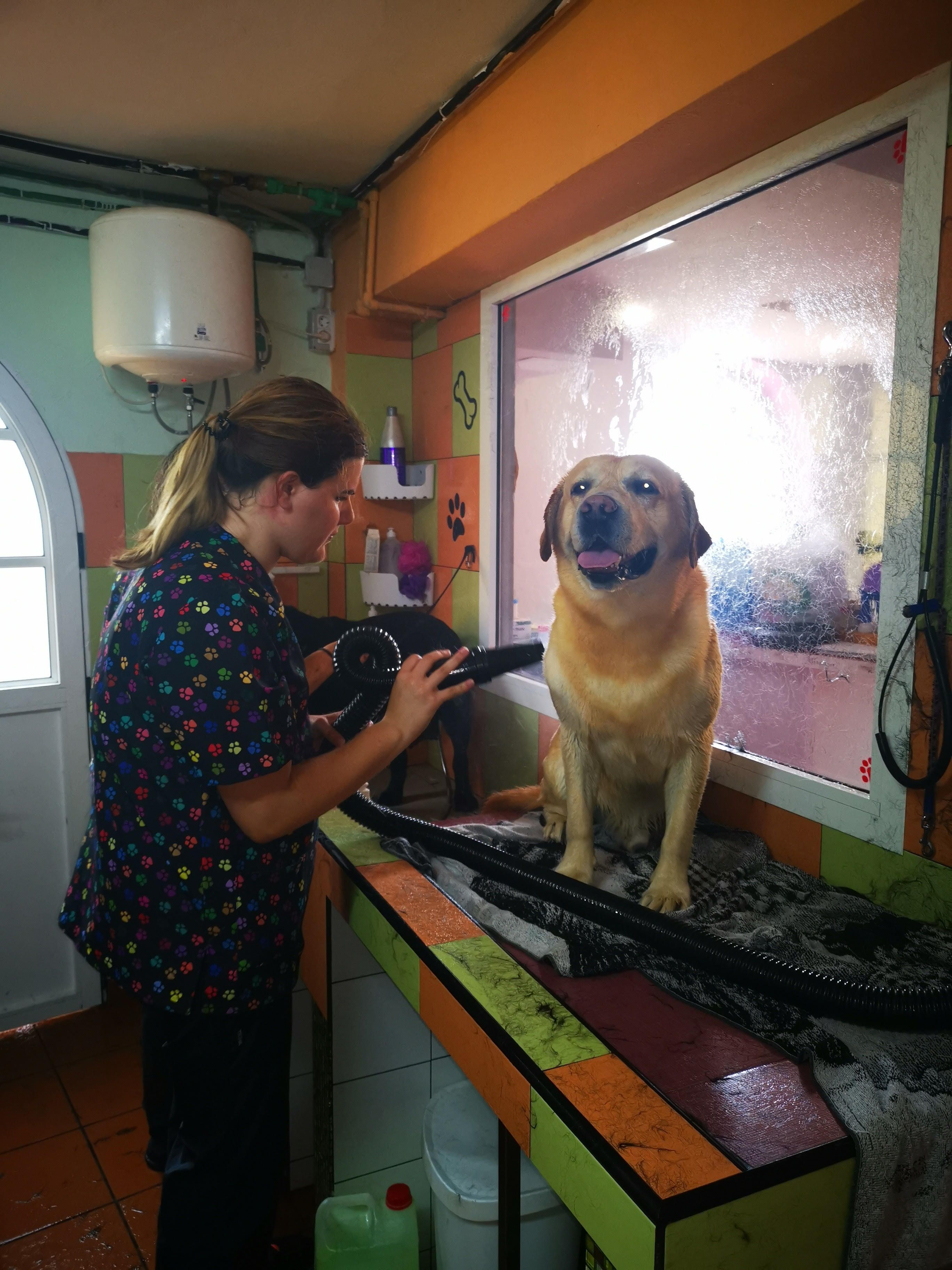 Estética canina en Las Palmas de Gran Canaria