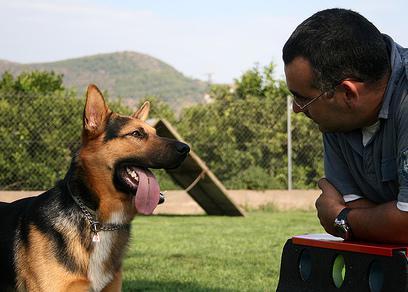 Etología: Servicios de Animalvet