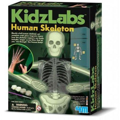 Esqueleto humano. 4M (Ver qué regalo de 6-9 años ó 9-12 años)