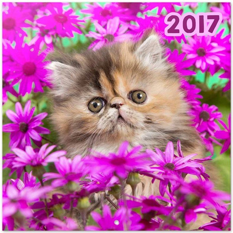 Calendario Pared 2017 Gato Chantrenne Cat