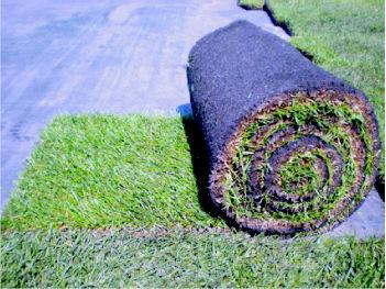 Foto 10 de Jardines (diseño y mantenimiento) en Belvis de Jarama | Viveros Bonsai