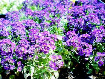 Foto 6 de Jardines (diseño y mantenimiento) en Belvis de Jarama | Viveros Bonsai