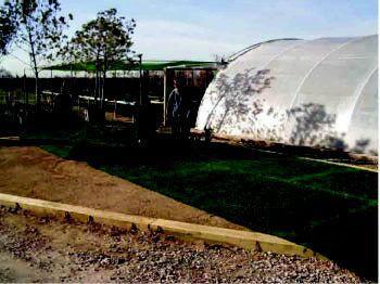 Foto 8 de Jardines (diseño y mantenimiento) en Belvis de Jarama | Viveros Bonsai
