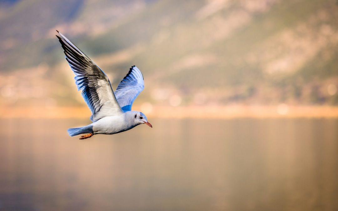 motivate-el-arte-de-volar-1080x675.jpg