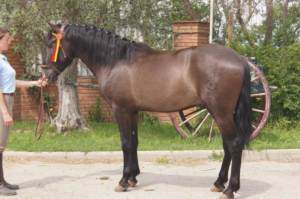 Venta de caballos: Servicios de Yeguada Claudio Pot
