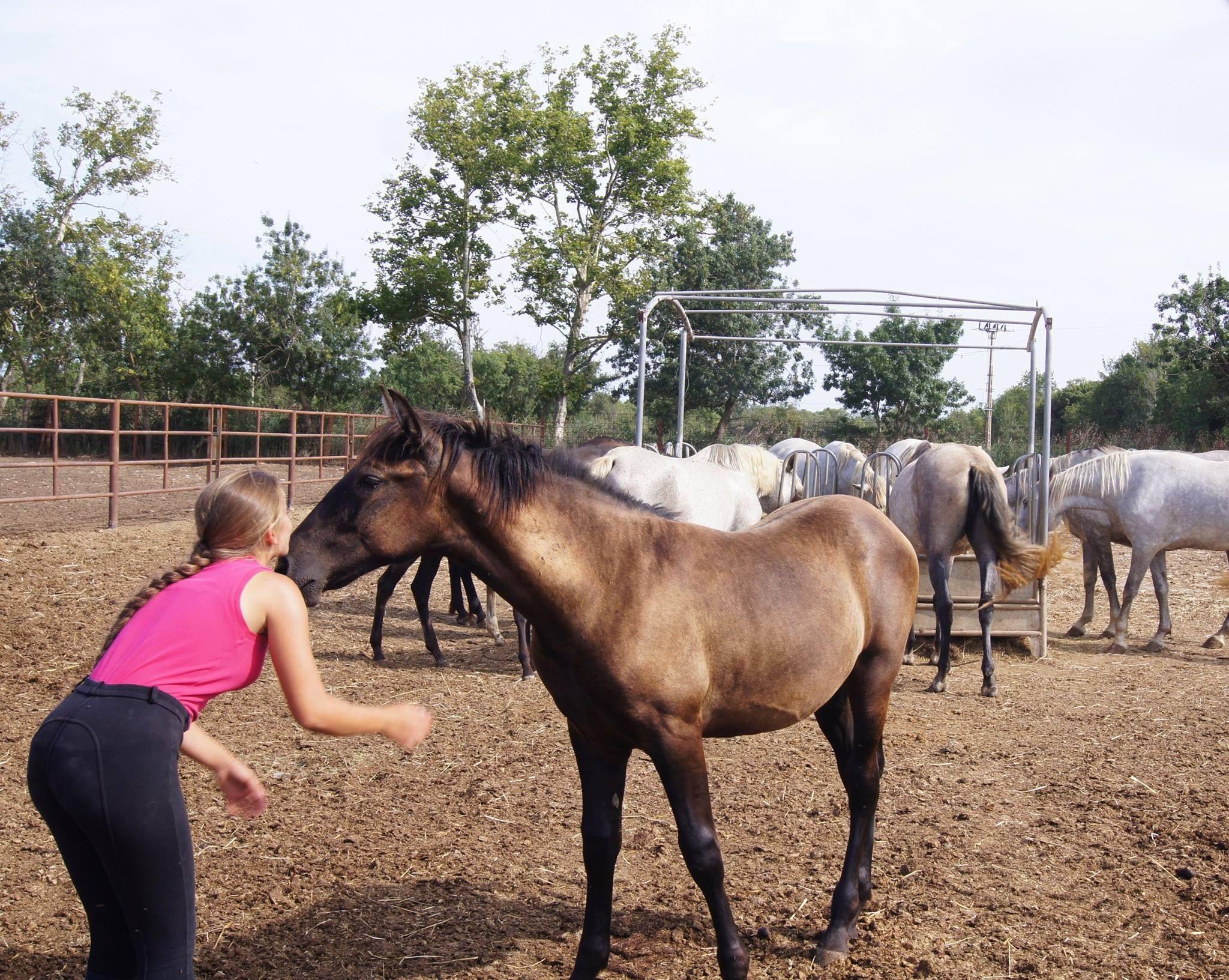 Espectáculos de caballos por toda Cataluña