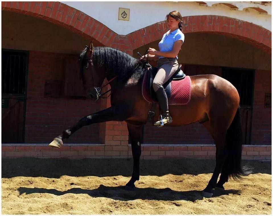 Clases de equitación: Servicios de Yeguada Claudio Pot