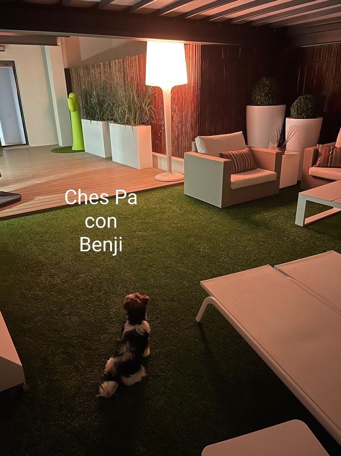 Benji, disfrutando de la terraza que los papis construyeron para juntitos pasar lindos momentos de expansión y felicidad, sobre el césped artificial en Valencia