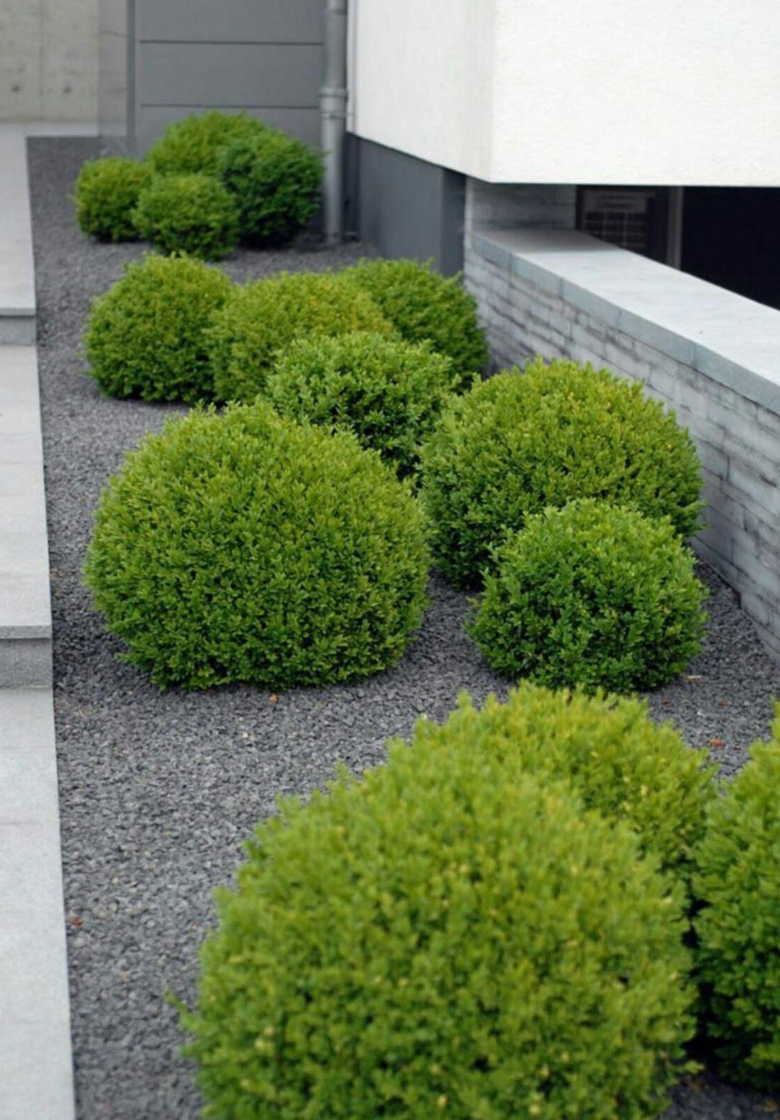 Foto 193 de Diseño y mantenimiento de jardines en Bétera | Ches Pa, S.L.