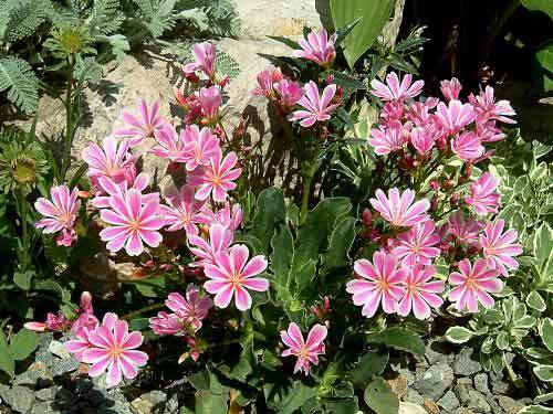 Plantas adaptadas a tu jardín