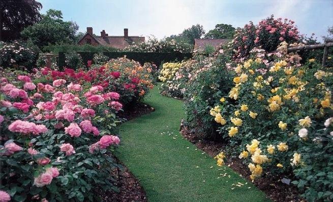 Diseño creativo de jardines