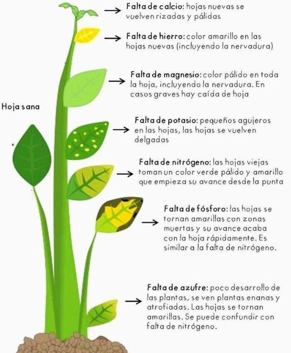 GUIA DE FALTA DE NUTRIENTES