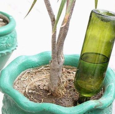 Como hacer un sistema de riego casero para tus plantas