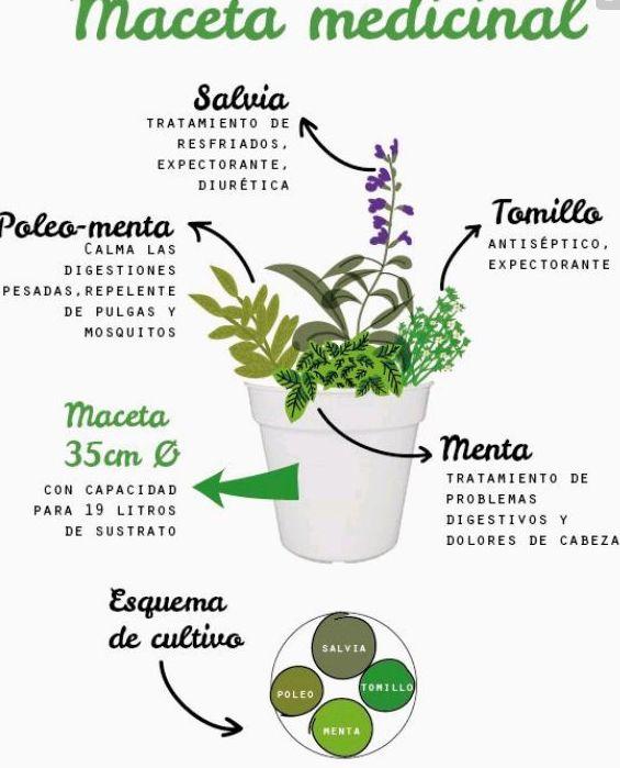 Cultiva tu maceta medicinal en casa