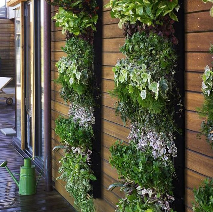 Foto 231 de Diseño y mantenimiento de jardines en Bétera | Ches Pa, S.L.