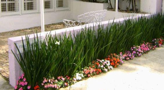 Foto 324 de Diseño y mantenimiento de jardines en Bétera | Ches Pa, S.L.