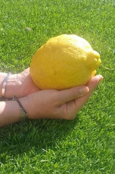 710 gramos de Limón ahí queda eso