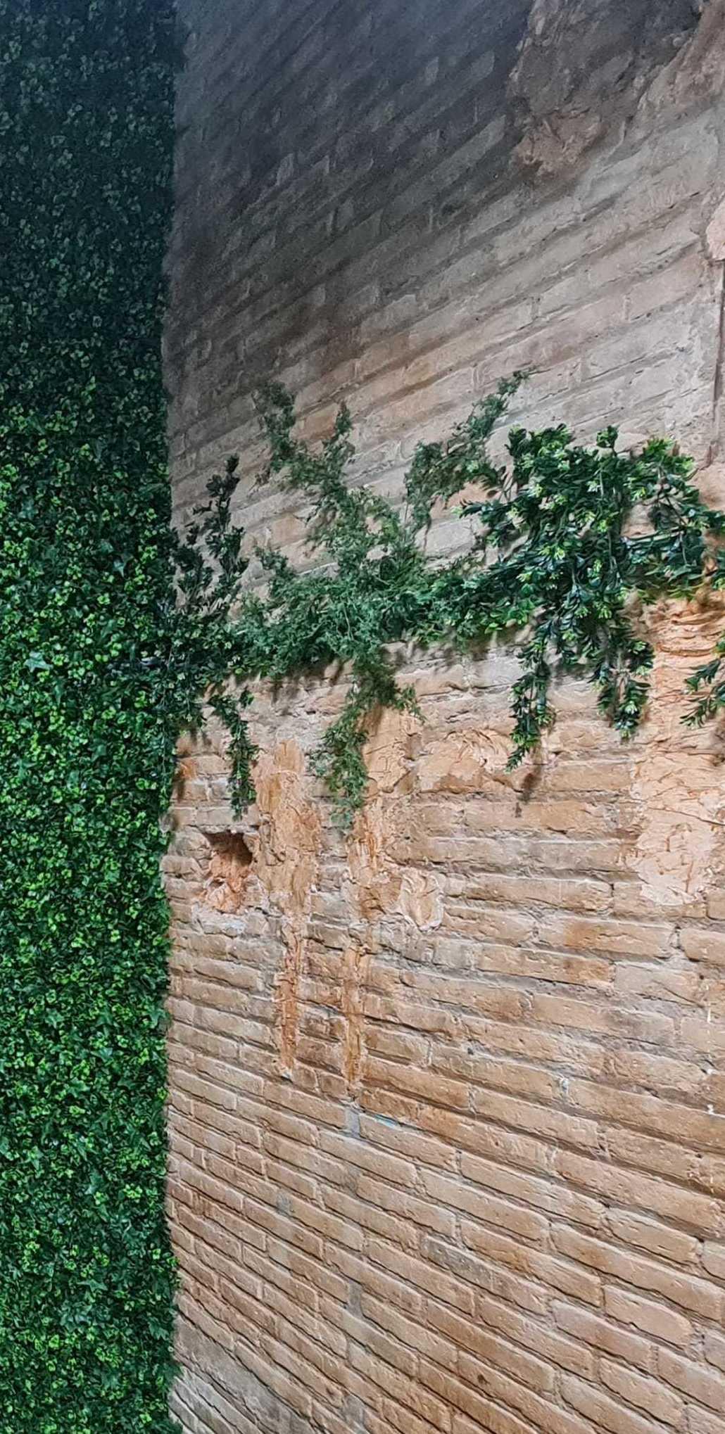 Decoración local comercial, jardín vertical