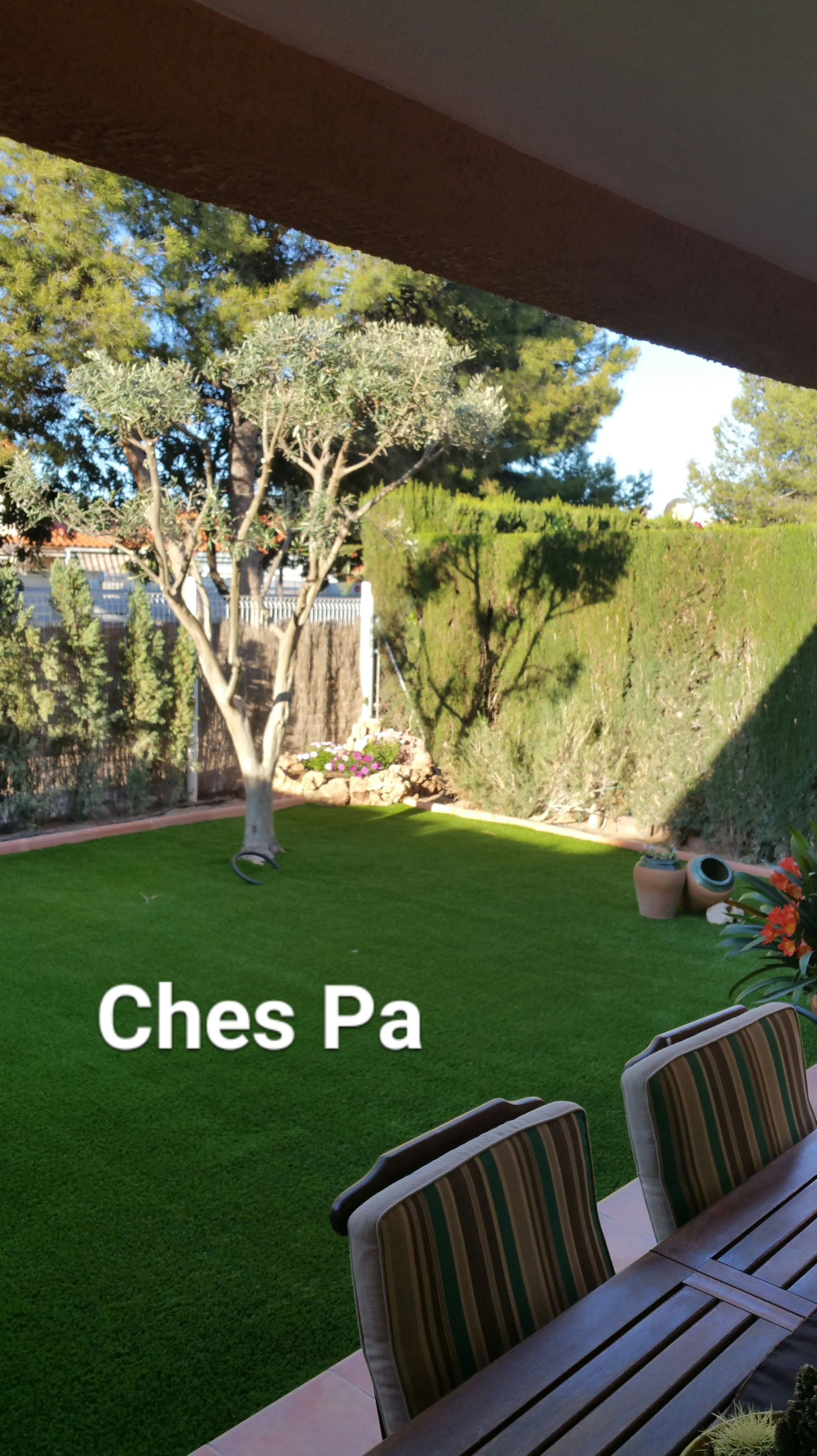 Foto 545 de Diseño y mantenimiento de jardines en Bétera | Ches Pa, S.L.