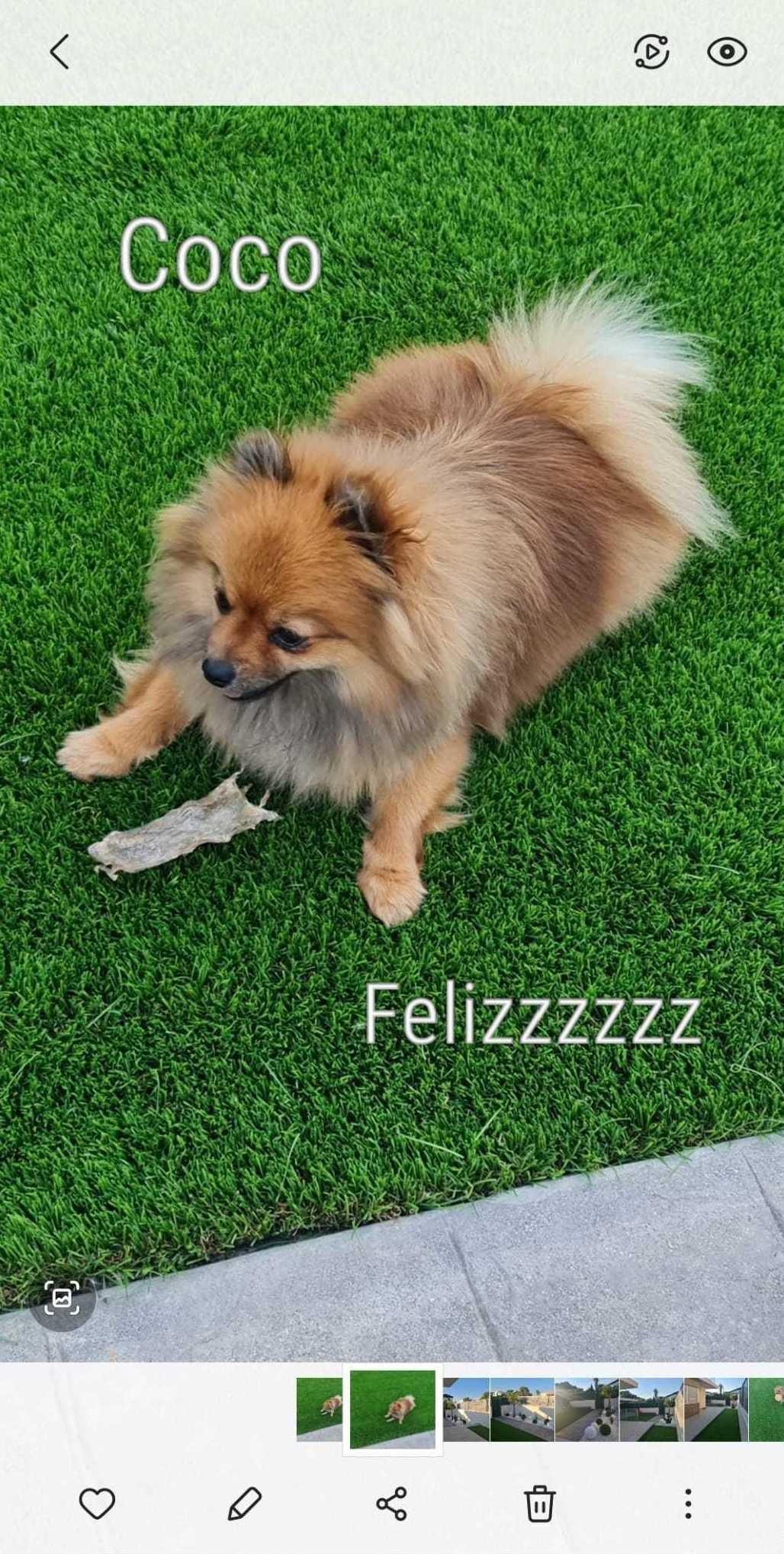 Coco sobre su césped artificial en Valencia