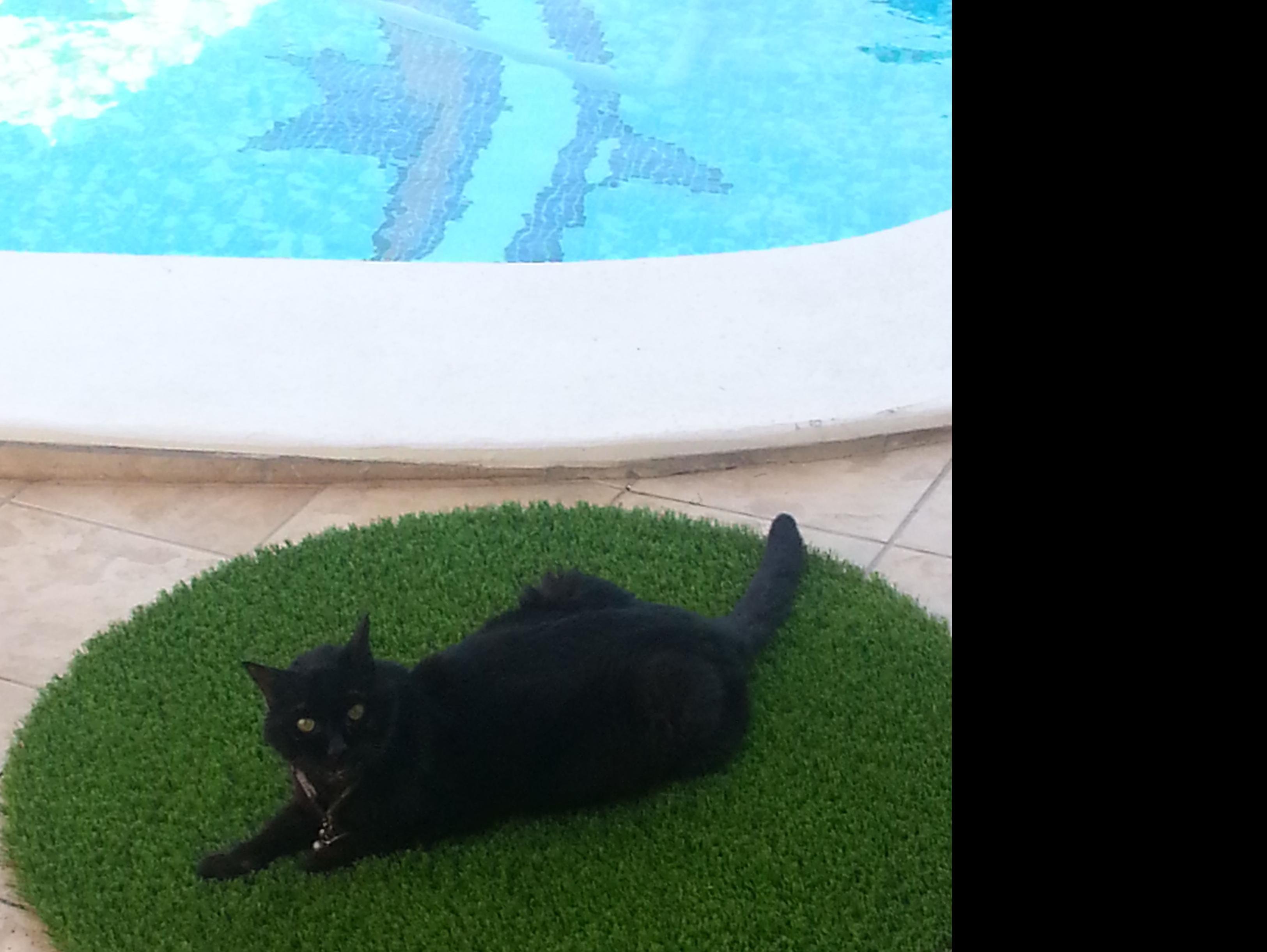 Coco, sobre alfombra de césped artificial...........