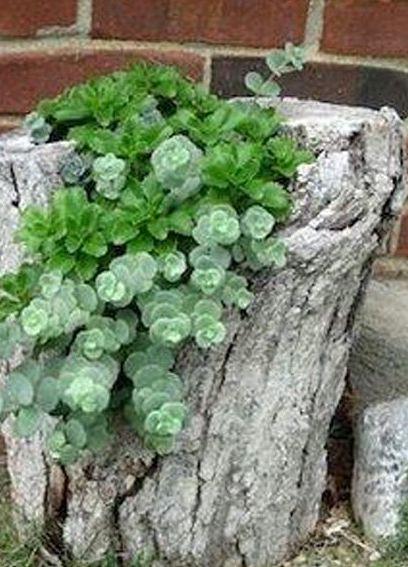Foto 309 de Diseño y mantenimiento de jardines en  | Ches Pa, S.L.