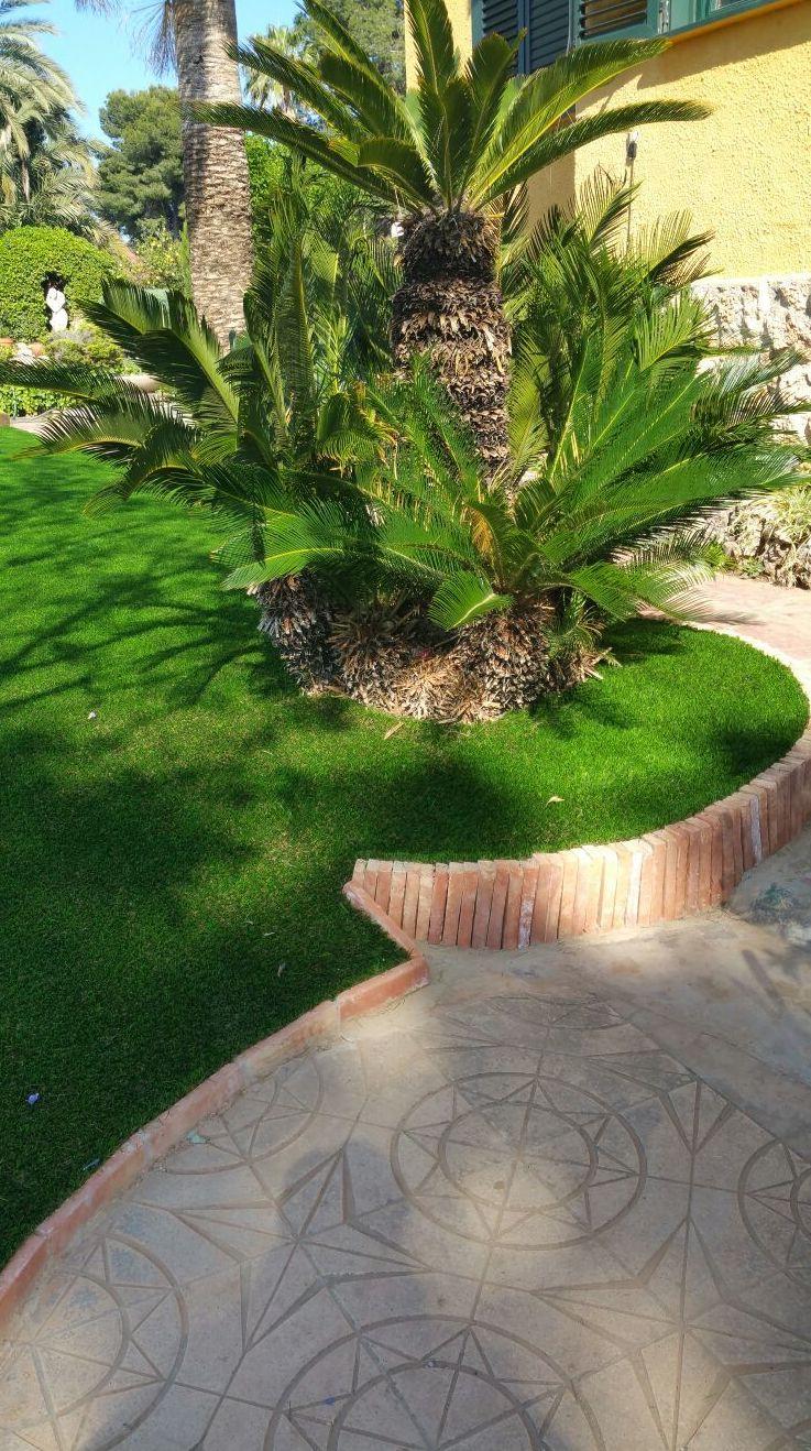 Foto 405 de Diseño y mantenimiento de jardines en Bétera | Ches Pa, S.L.