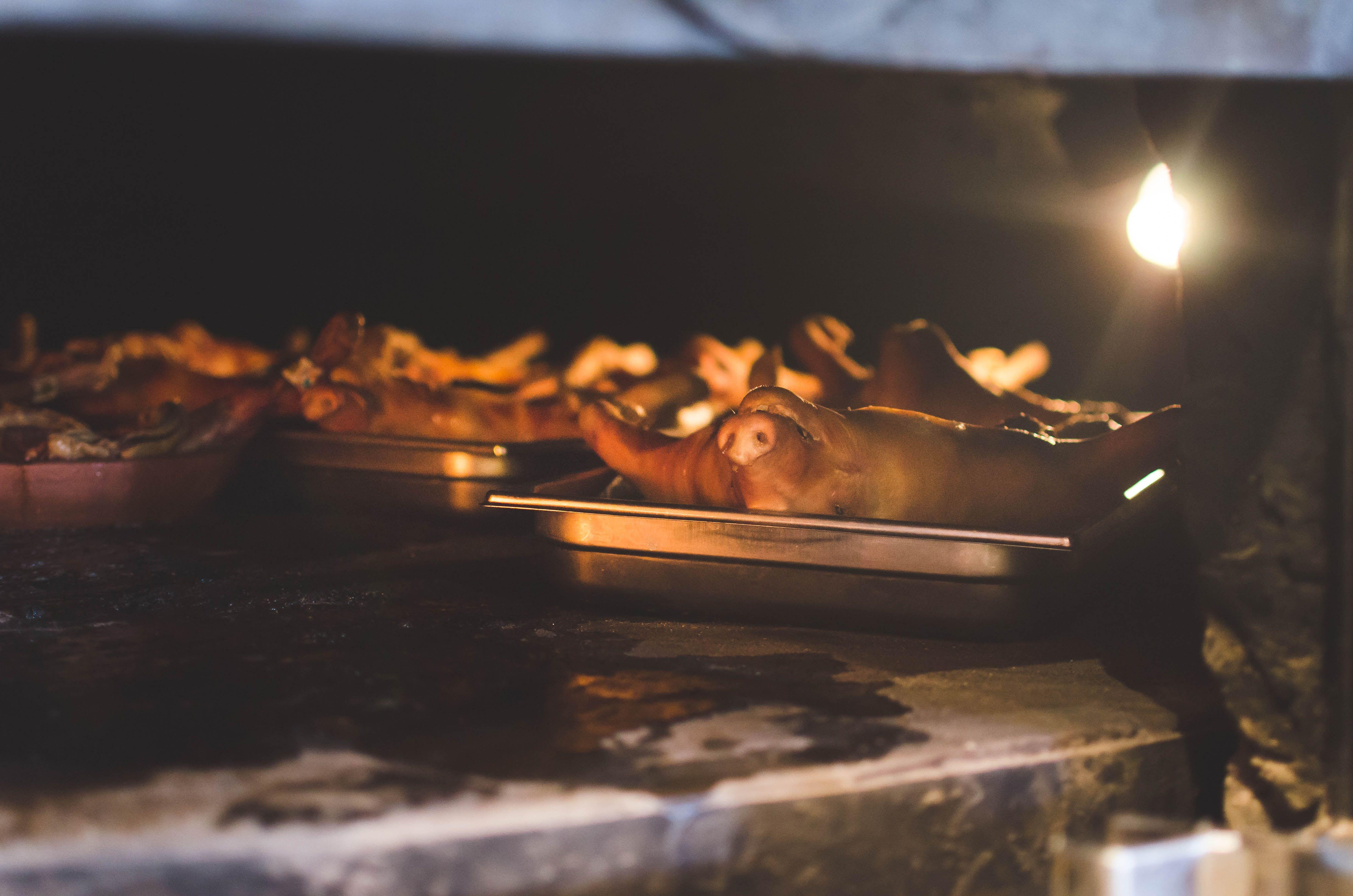 Donde comer cochinillo asado en Segovia