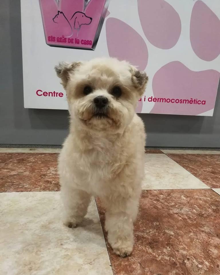 Todo para el bienestar de tu mascota en Girona