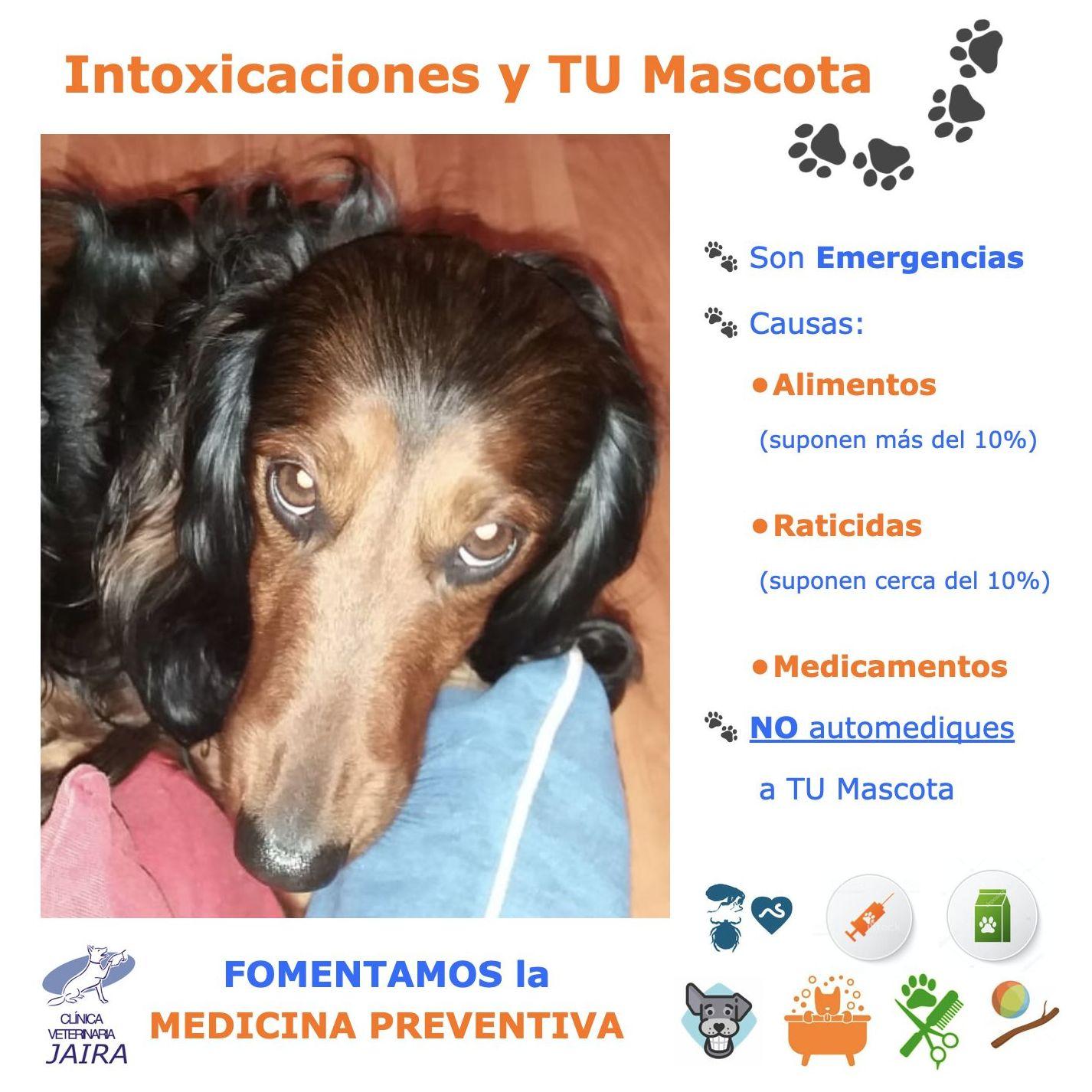 Intoxicaciones y TU Mascota
