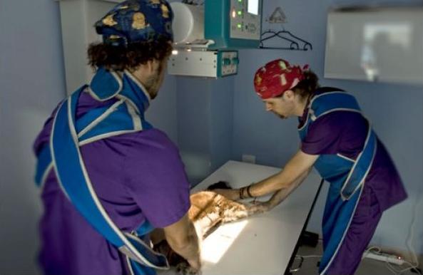 Foto 10 de Veterinarios en Las Palmas de Gran Canaria | Clínica Veterinaria Jaira