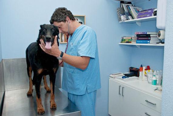 Foto 38 de Veterinarios en  | Clínica Veterinaria Jaira