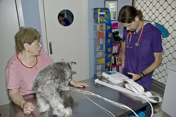 Foto 6 de Veterinarios en Las Palmas de Gran Canaria | Clínica Veterinaria Jaira