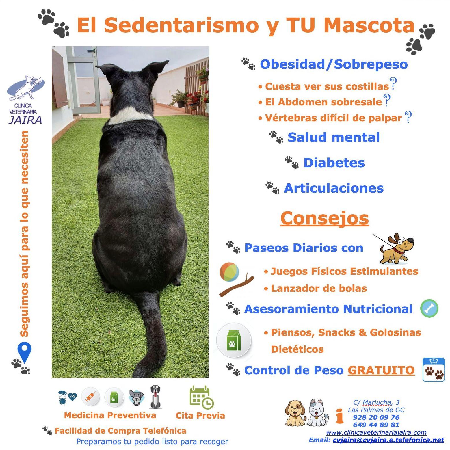 El Sedentarismo y TU Mascota: SÍNTOMAS & CONSEJOS